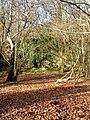 Sandstone Outcrops, Birchden Wood - geograph.org.uk - 656462.jpg