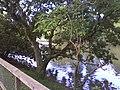 Sapucaia do Sul - RS, Brazil - panoramio.jpg