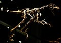 Saurornitholestes Royal Tyrrell.jpg