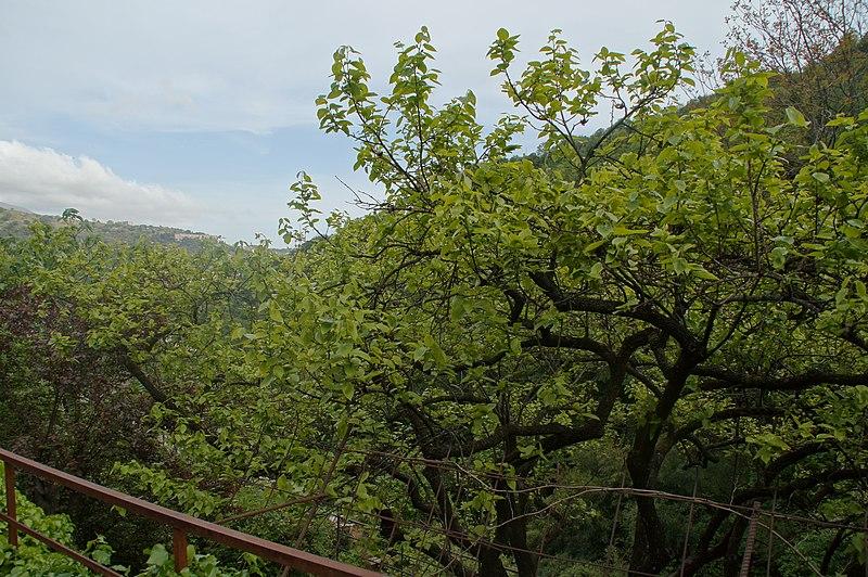 File:Scampagnata - panoramio (3).jpg