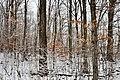 Schneider Woods - panoramio.jpg