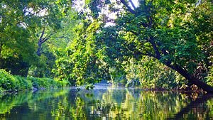 Schuylkill Canal - Taken from a kayak between Port Providence and Lock 60,