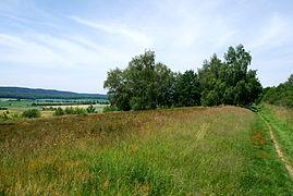 Schwarze Heide - Heidelandschaft 4.JPG