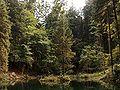 Schwarzer See3.jpg