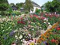 Schwollen - Blumengarten - panoramio.jpg