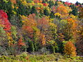 Shavers-fork-fall-foliage - West Virginia - ForestWander.jpg