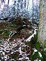 Sheela's Next Tree - panoramio.jpg