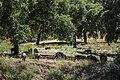 Sierra norte de sevilla-6 (14345535160).jpg