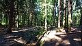 Silbersee Pond Dresden Heide DSC05340.jpg