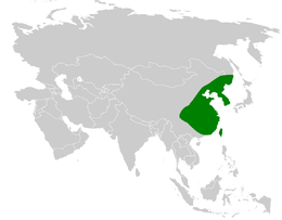 Sinosuthora webbiana distribution map.png