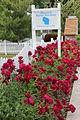 Sissons Peony Gardens flowerbed.jpg