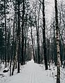 Skunk Cabbage Trail - Winter Ski Trail at Banning State Park, Minnesota (39677908132).jpg