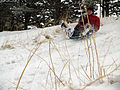 Sledding by David Shankbone.jpg