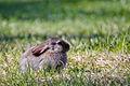 Small European Rabbit.jpg