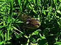 Smiling Salamander (9558312096).jpg