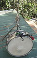 Snare on the porch 1.JPG