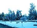 Sneh Tatranské Zruby 17 Slovensko1.jpg