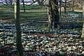 Snowdrops and Fence, Kildale Hall - geograph.org.uk - 685356.jpg