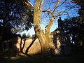 Sombras sobre o santuario Santa Columba das Pías, Sobrado.jpg