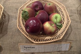 Spartan (apple) - Image: Spartan Apple