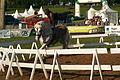 Spectacle équestre Bernard Quental Sofie Agnoux Nathalie Barot Mondial du percheron 2011 CL J Weber12 (24000750631).jpg
