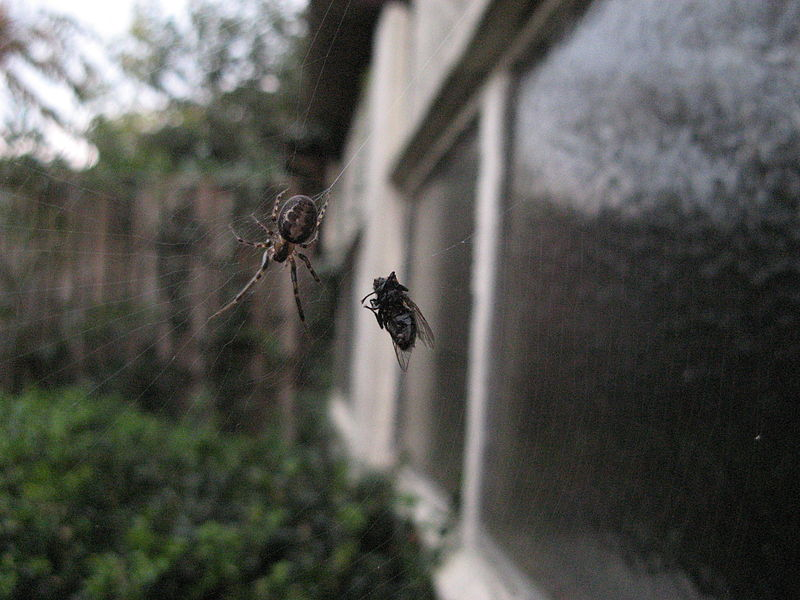 Nice catch, arachnid.