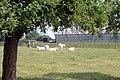 Spring Farm, Minshull Vernon - geograph.org.uk - 197123.jpg