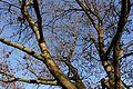Square Auguste Renoir @ Porte de Vanves @ Paris (30836610543).jpg