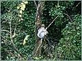 Squirrel (505686345).jpg