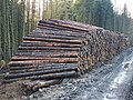 Stacked logs - geograph.org.uk - 285052.jpg