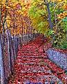 Stairs To Autumn (235905569).jpeg