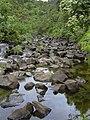 Starr-040713-0031-Aleurites moluccana-view stream-Kopiliula-Maui (24688139136).jpg