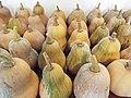 Starr-131002-2351-Cucurbita moschata-harvested fruit-Hawea Pl Olinda-Maui (24596584624).jpg