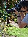 Starr-170224-0934-Brassica rapa var parachinensis-flowering in veggie garden with Sumio photographing-Hawea Pl Olinda-Maui (32567123833).jpg
