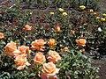 Starr 020815-0022 Rosa sp..jpg