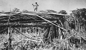 Tamborine Mountain - Timber cutting at Tamborine Mountain in 1912