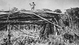 Tamborine Mountain - Timber cutting at Tamborine Mountain in 1912