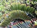 Stegasaurus Leaves (3309372604).jpg