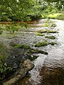 Stepping stones, Rushford Mill - geograph.org.uk - 915781.jpg