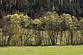 Strassburg Gurk-Fluss Bäume an den Ufern 11042016 3041.jpg