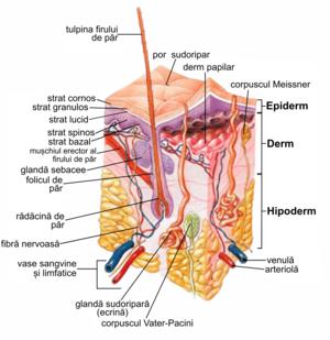 pot dispăru negi genitale parasitic helminth larvae