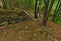 Stužická rieka, Národná prírodná rezervácia Stužica, Národný park Poloniny.jpg