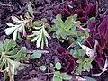 Succulente 2.jpg