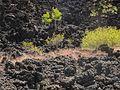 Sunset Crater Volcano National Monument-Arizona1.jpg