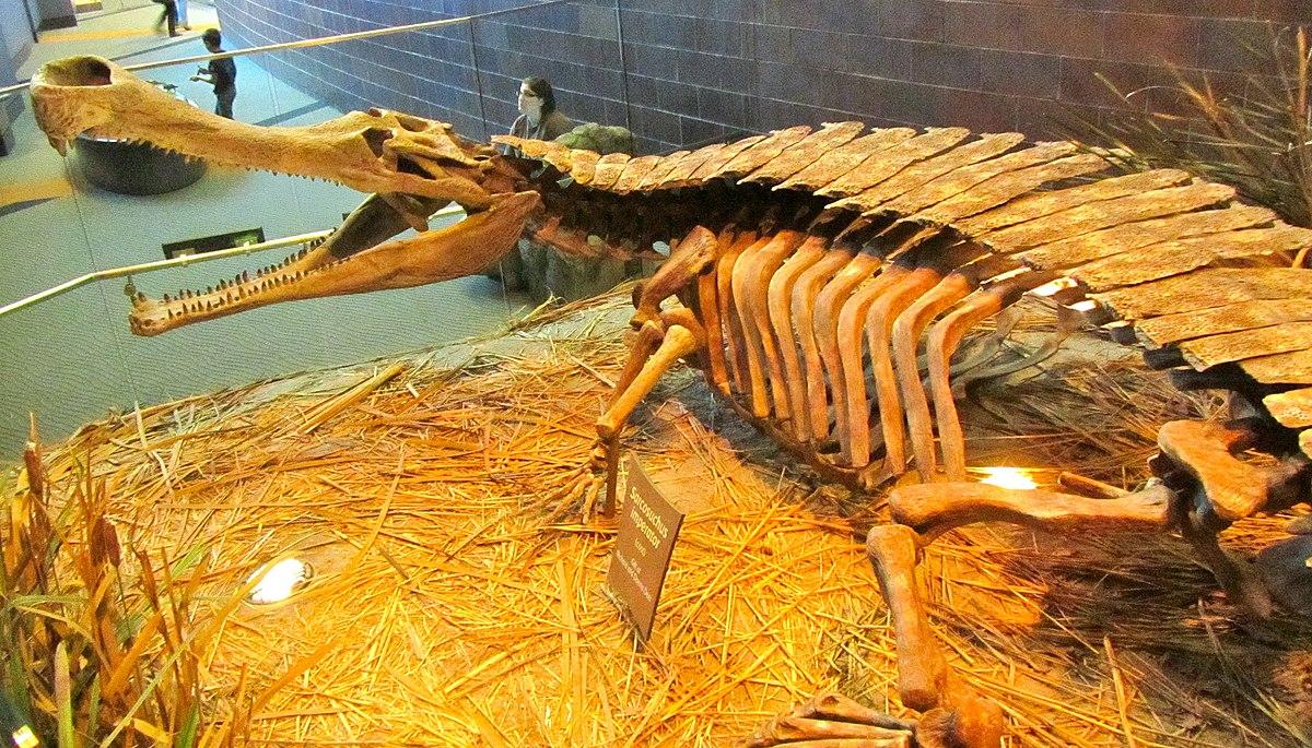 Pholidosauridae Wikipedia