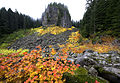 Table Rock Wilderness (16163314569).jpg