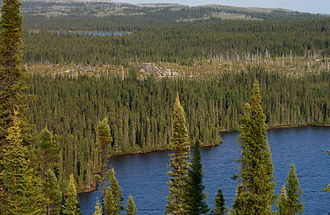 Northern Canada - A boreal forest landscape in Northern Quebec.