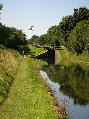 Tame Valley Canal - Image: Tame Valley Canal and heron