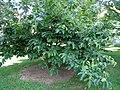 Tanger Arboretum - 281.jpg