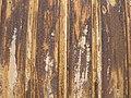 Textures IMG 1337 11.jpg